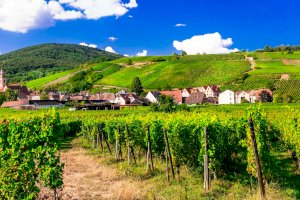 Ophorus Blog - 5 Alsace Appellations you have probably never heard of