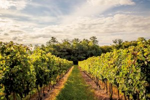 Ophorus Blog - The 5 Most Famous Bordeaux Wine Appellations