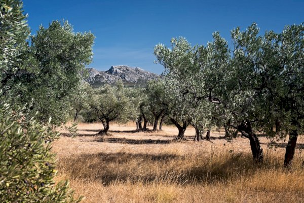 Ophorus Tours - Transfers from Hyères