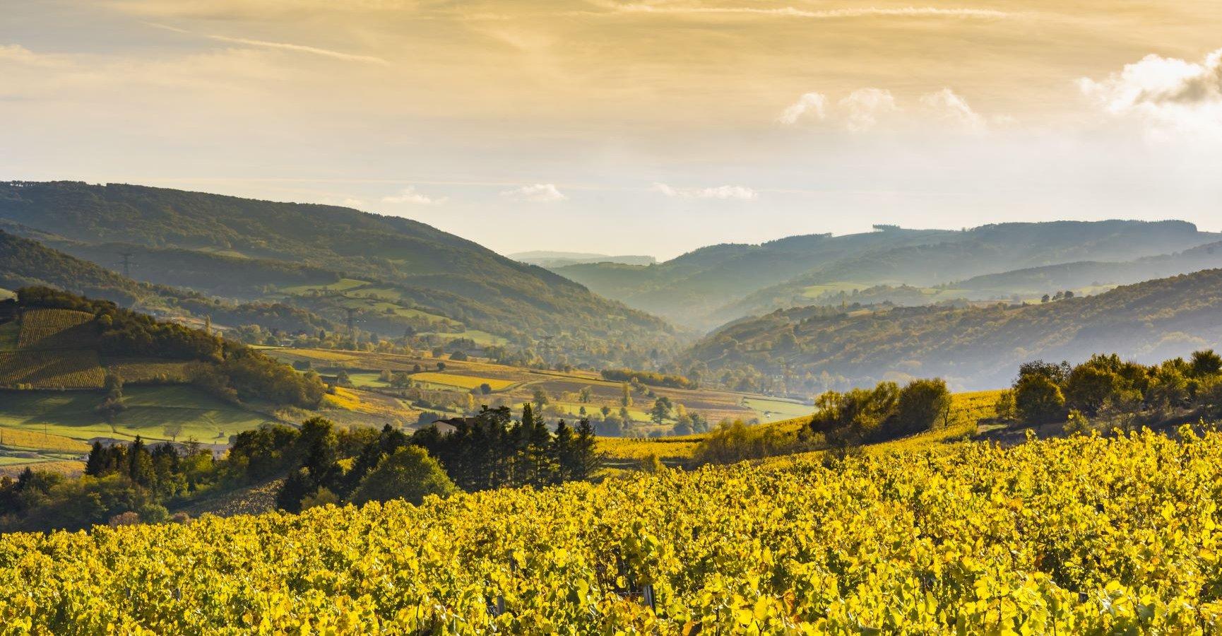 Ophorus Tours -  Burgundy