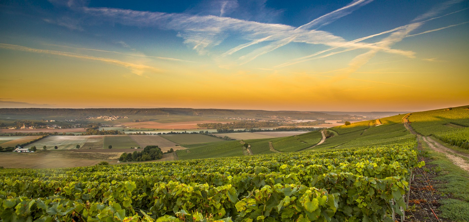 Ophorus Tours - Champagne