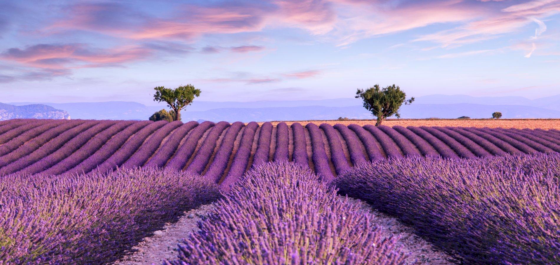 Ophorus Tours - Provence