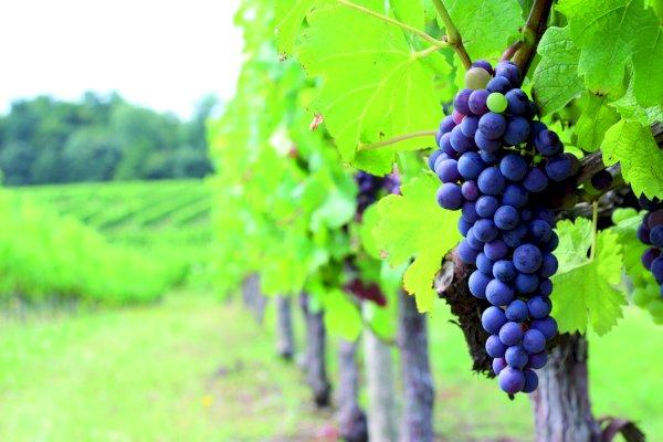 Ophorus Tours - 7 Days Combo WSET Level 2, Saint Emilion & Médoc Wine tours - Based in Bordeaux