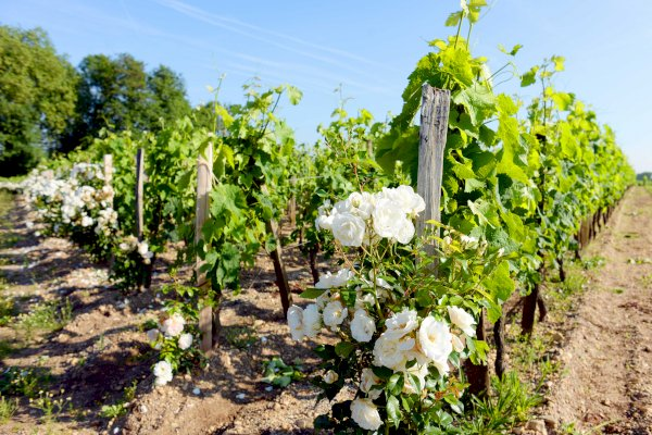 Ophorus Tours - 4 days Bordeaux Wine Tour Shared Travel Package - Based in Bordeaux