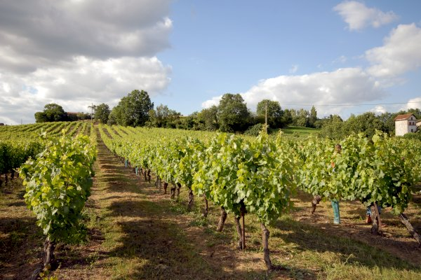 Ophorus Tours - Gaillac Wine Tour Private Half Day Trip From Toulouse