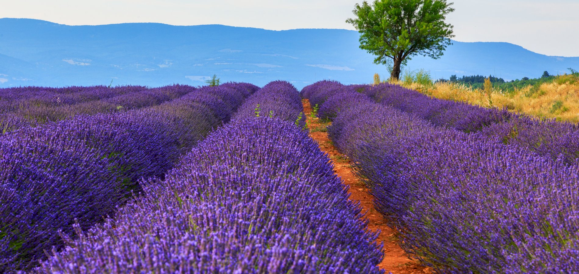 Ophorus Tours - Lavender Tour Shared Day Trip from Aix en Provence