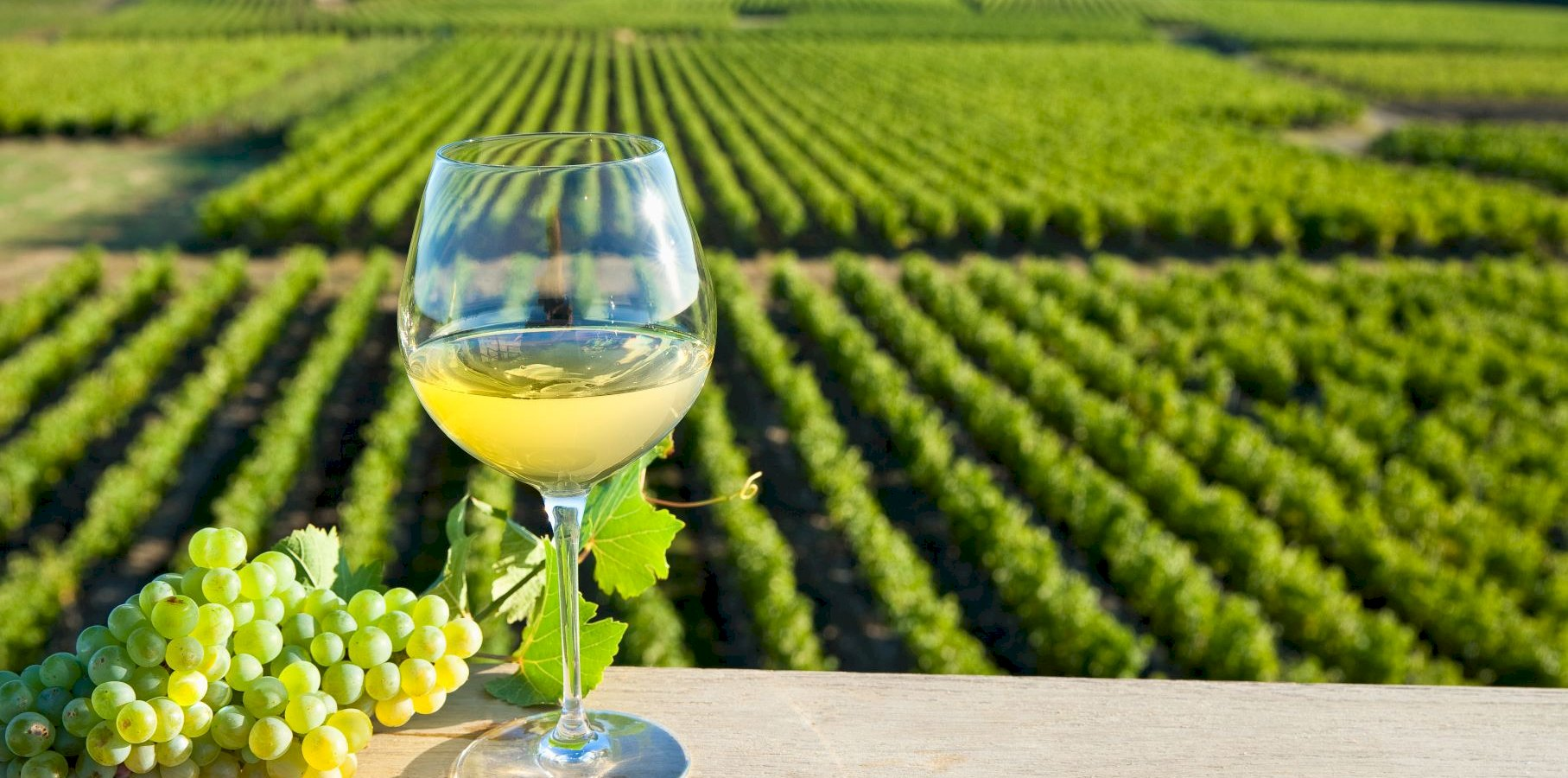 Ophorus Tours - Loire Valley Wine Tour Small Group Shore Excursion From Nantes