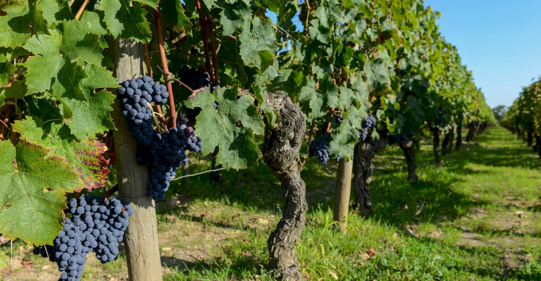 Ophorus Tours - Medoc Wine Tour Shared Half Day Trip From Bordeaux