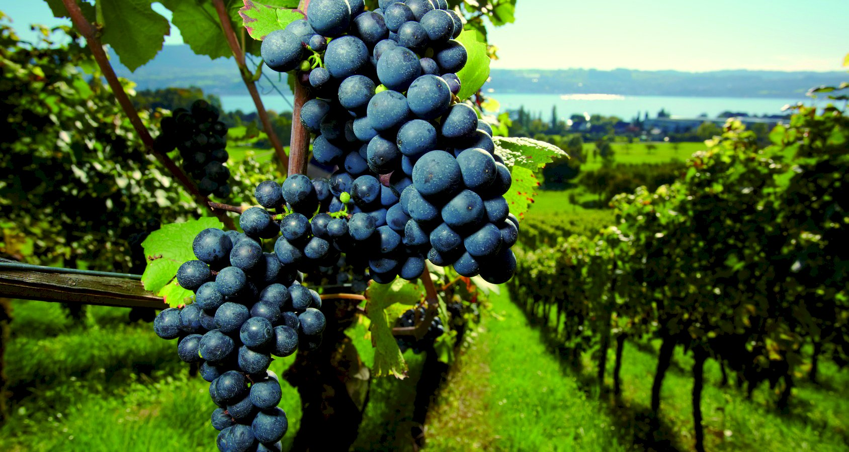 Ophorus Tours - Medoc Wine Tour Small Group Private Full Day Shore Excursion From Bordeaux