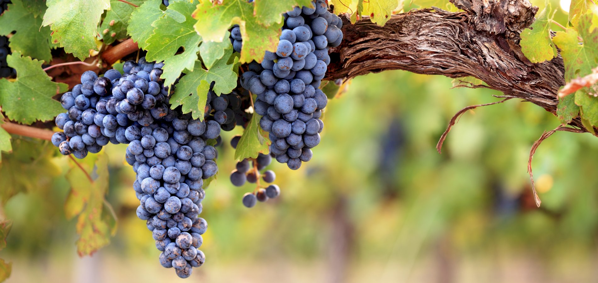 Ophorus Tours - Medoc Wine Tour Small Group Private Half Day Shore Excursion From Bordeaux