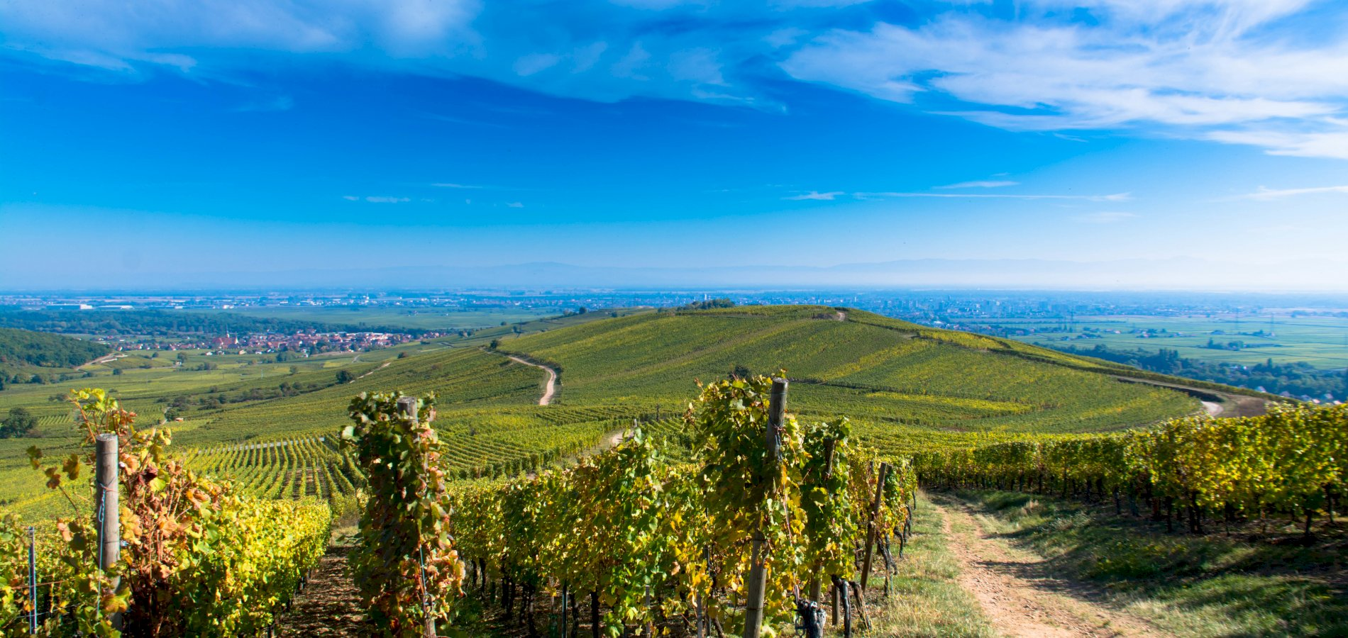 Ophorus Tours - Alsace Wine Tour Shared Full Day Trip From Strasbourg