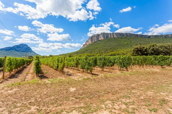 Ophorus Tours - Languedoc Wine Tour & Oyster Tasting Shared Half Day Trip from Montpellier