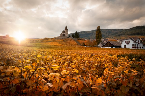 Ophorus Tours - Alsace Wine Tour Shared Half Day Trip From Strasbourg