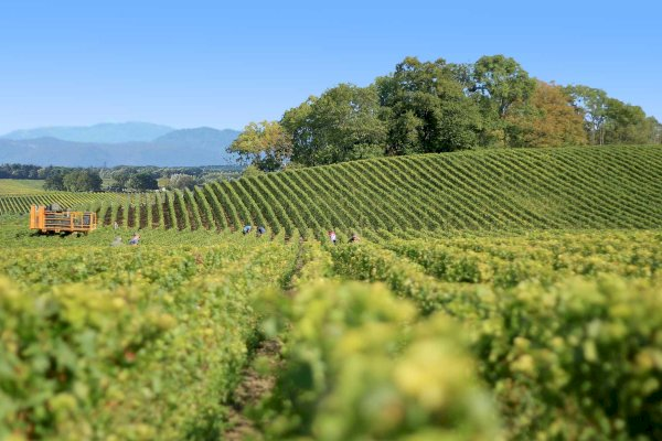 Ophorus Tours - Languedoc Wine Tour Shared Half Day Trip from Montpellier