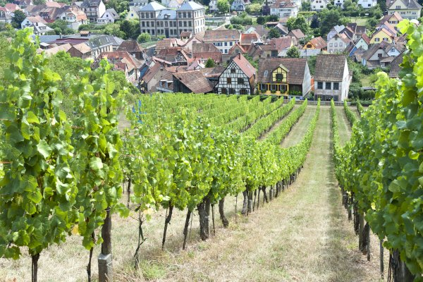 Ophorus Tours - Alsace Villages & Wines Private Half Day Trip From Strasbourg