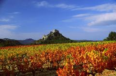 Ophorus Tours - Provence Wine Tour Shared Full Day Trip from Aix en Provence