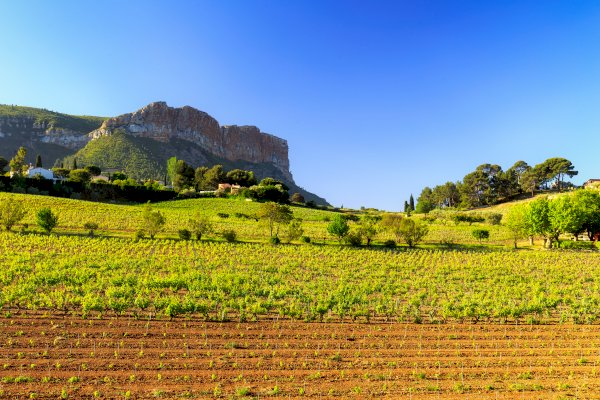 Ophorus Tours - Provence Wine Tour Private Day Trip from Aix en Provence
