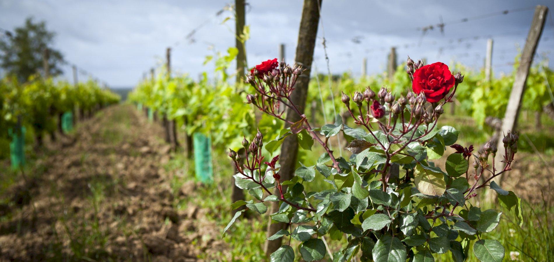 Ophorus Tours - Saint Emilion Wine Tour Shared Full Day Trip From Bordeaux