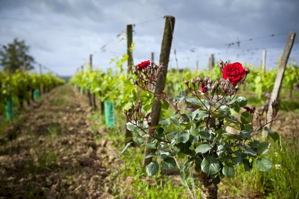 Ophorus Tours - Saint Emilion Wine Tour Shared Full Day Trip From Bordeaux