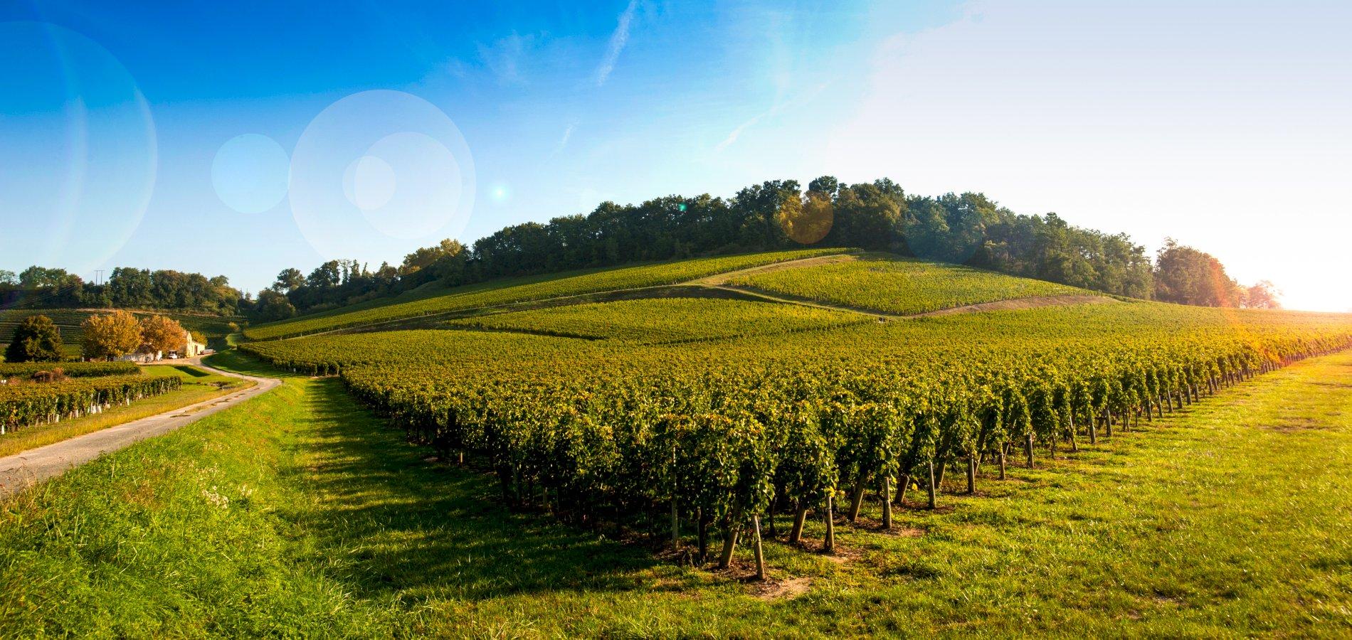 Ophorus Tours - Saint Emilion Wine Tour Shared Half Day Trip From Bordeaux