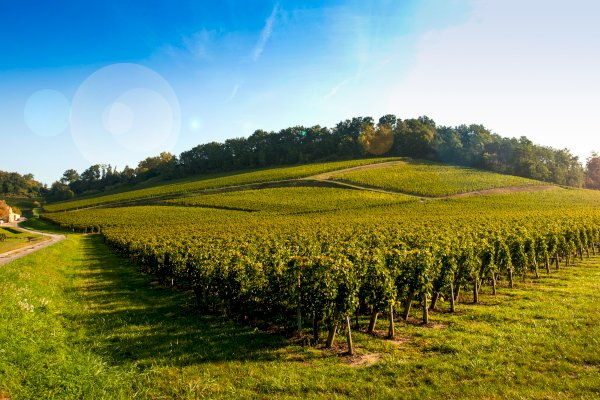 Ophorus Tours - Saint Emilion Wine Tour Shared Half Day Trip From Bordeaux