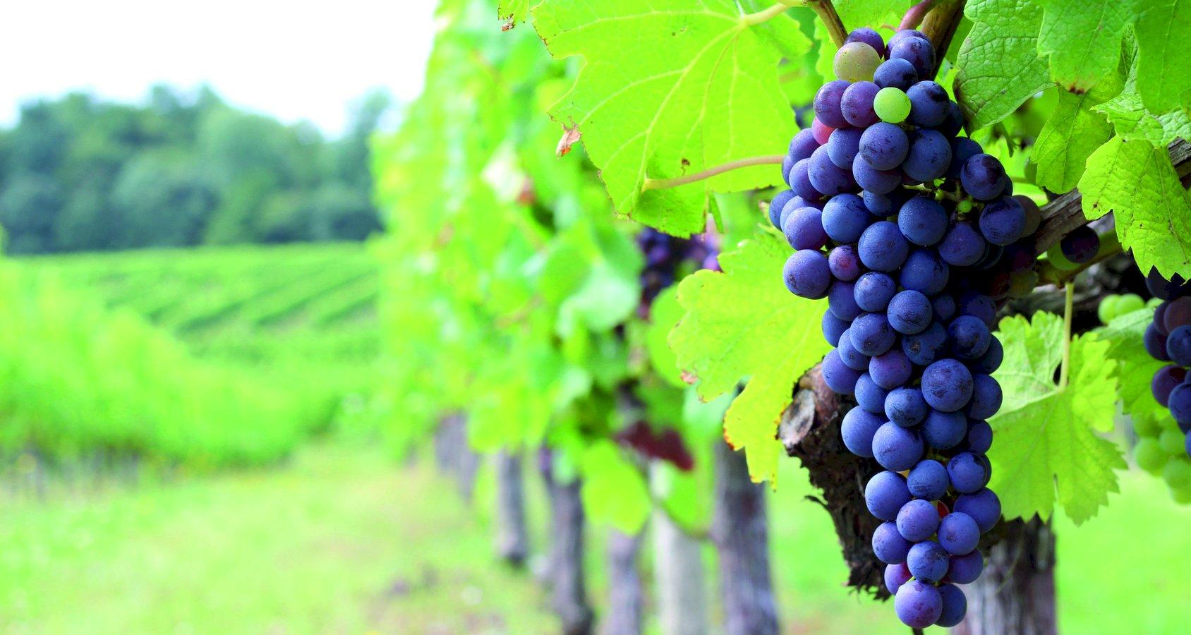 Ophorus Tours - Saint Emilion Wine Tour Private Full Day Shore Excursion From Bordeaux