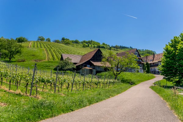 Ophorus Tours - The German Wine Route Private Full Day Trip From Strasbourg