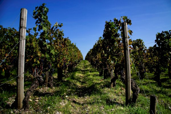 Ophorus Tours - Medoc, St Emilion & Graves Wine Tour Small Group Private Full Day Trip from Bordeaux