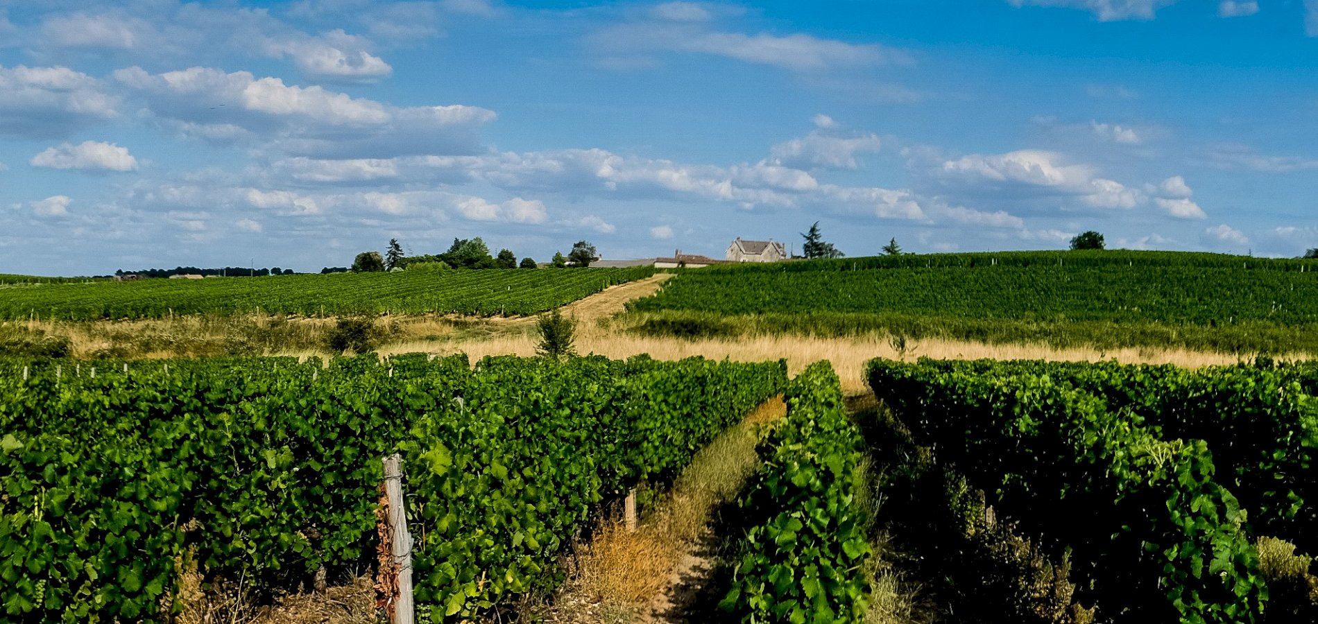 Ophorus Tours - 5 Days Bordeaux Grands Crus Wines Private Travel Package - 4* Hotel Option