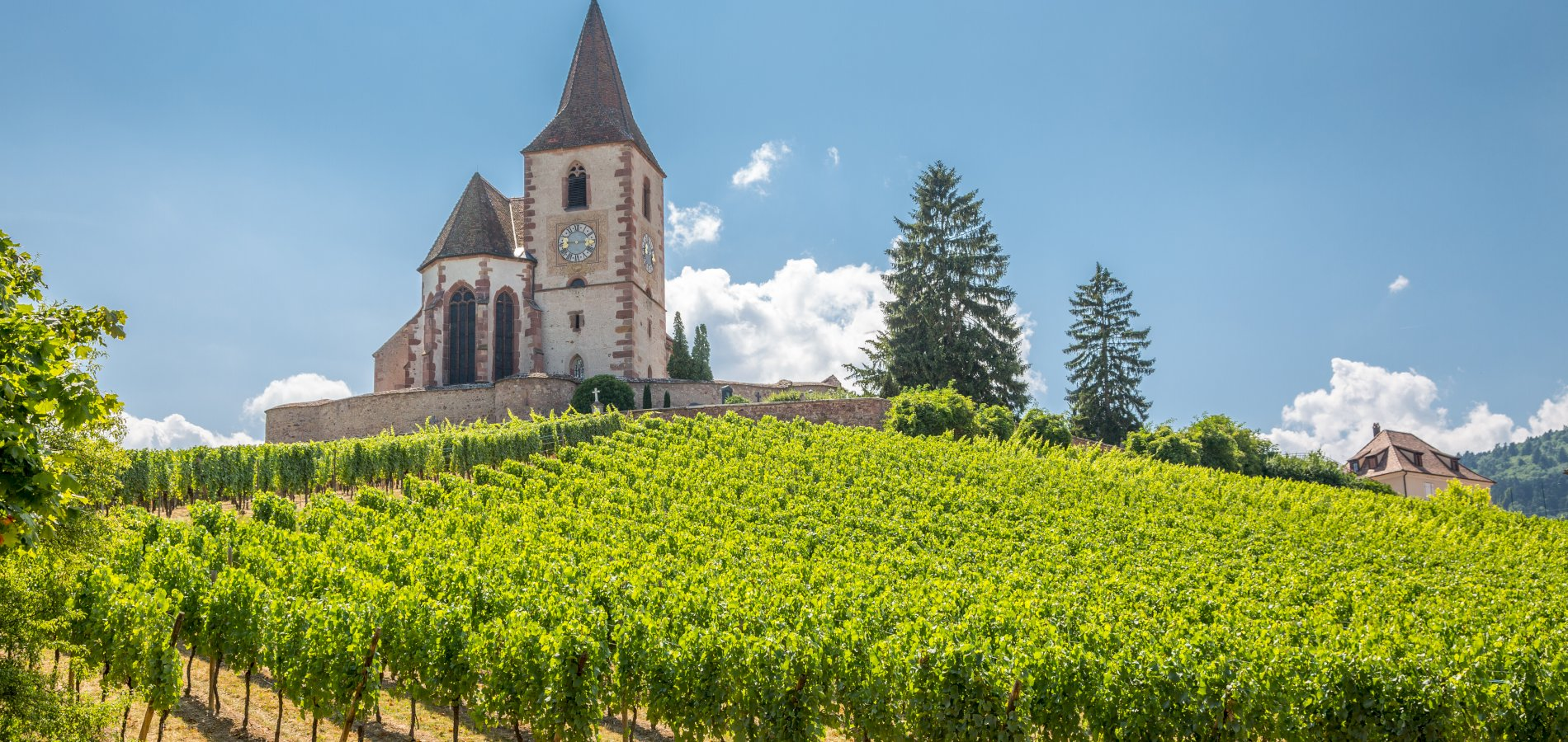 Ophorus Tours - Alsace Wine Tour Shared Day Trip From Colmar