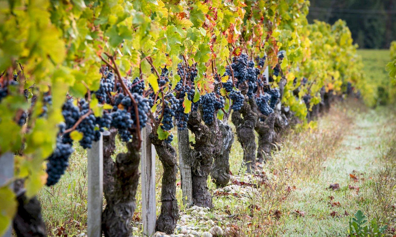 Ophorus Tours - Medoc Wine Tour Private Shore Excursion From Le Verdon to Bordeaux