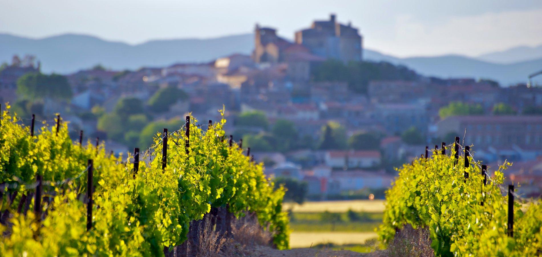 Ophorus Tours - Languedoc Wine Tour Private Shore Excursion From Sète