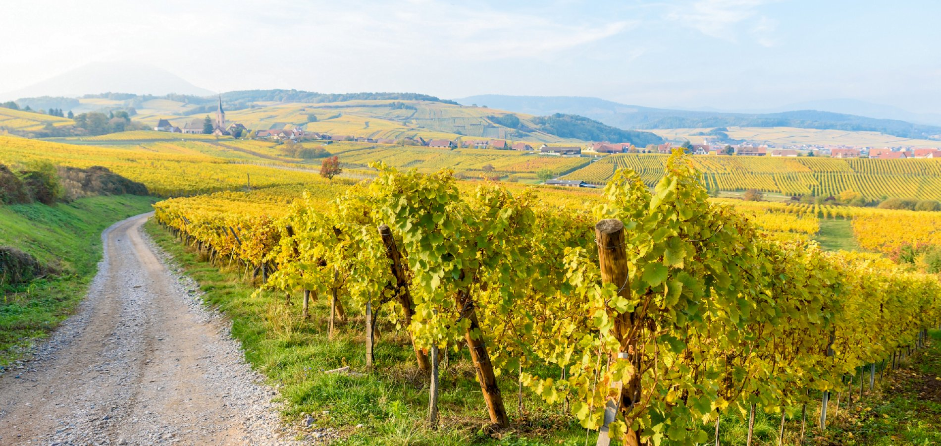 Ophorus Tours - Grands Crus Alsace Wine Tour Private Day Trip From Colmar