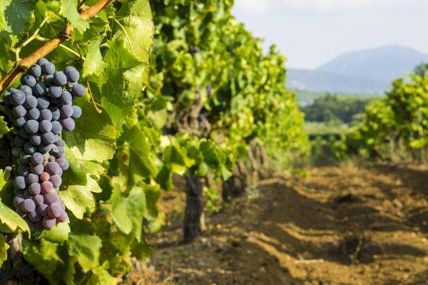 Ophorus Tours - Crus Classés of Provence Wine Tour Private Shore Excursion From Saint Tropez
