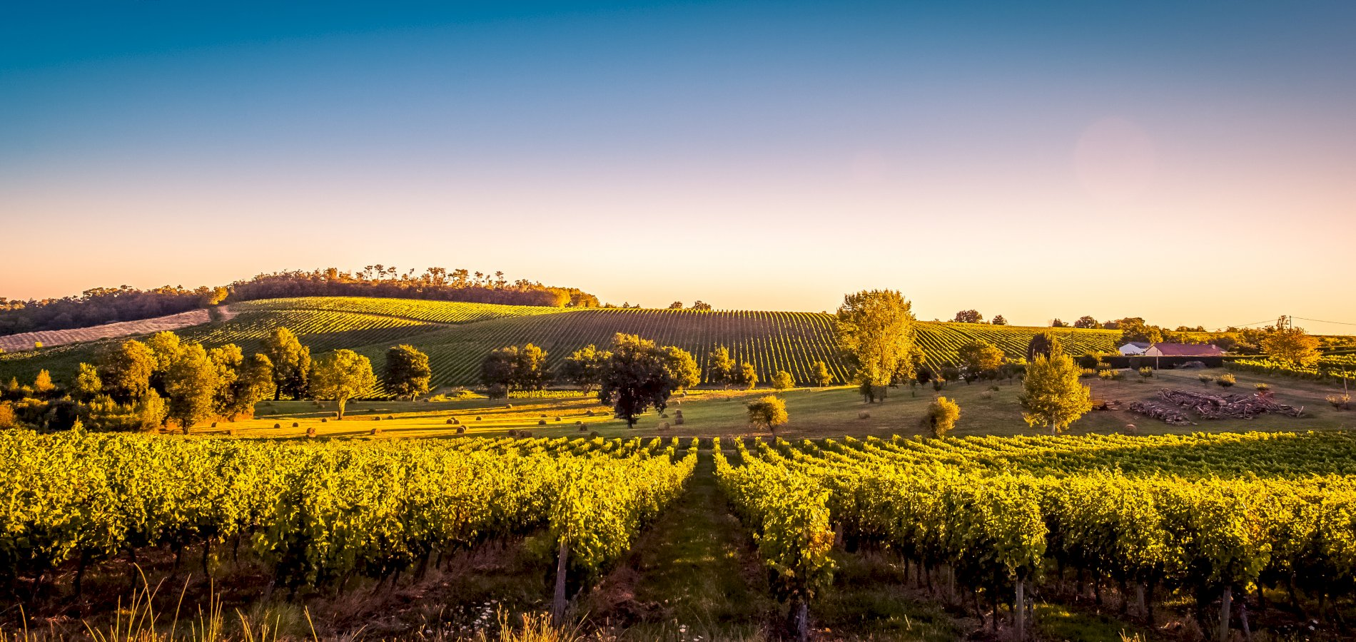 Ophorus Tours - Alsace Wine Tour Private Half Day Trip From Strasbourg for 2 persons