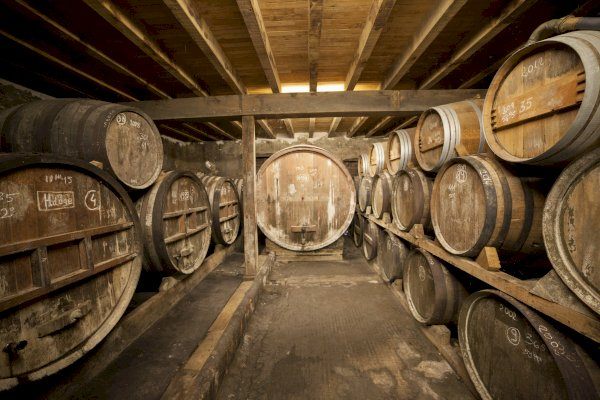Ophorus Tours - Armagnac Wine Tour Private Day Trip From Bordeaux
