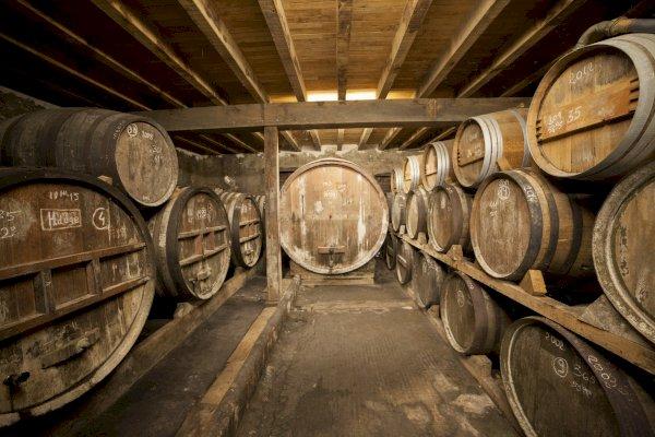 Ophorus Tours - Armagnac Wine Tour Private Day Trip From Bordeaux
