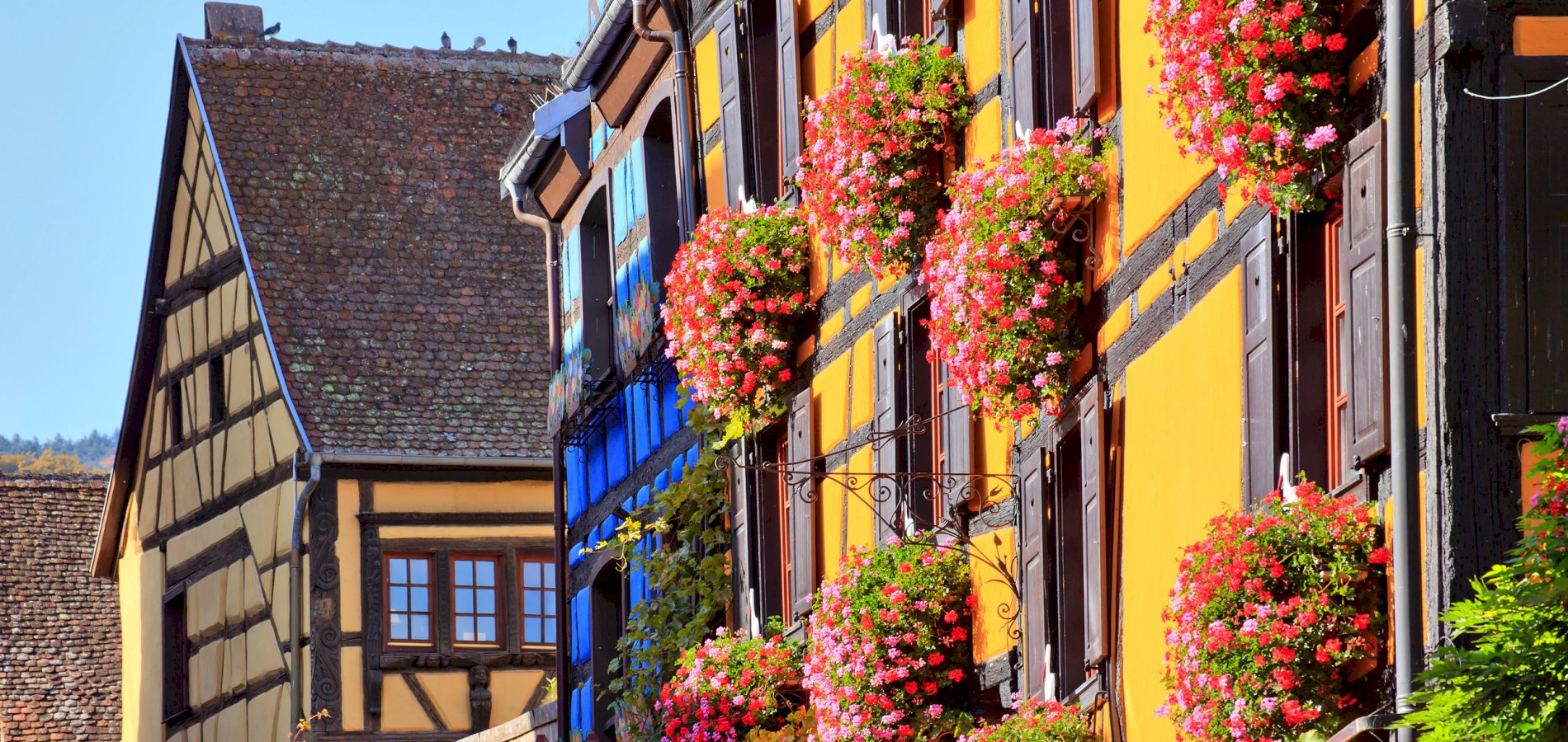 Ophorus Tours - From Strasbourg to Riquewihr Private Transfer