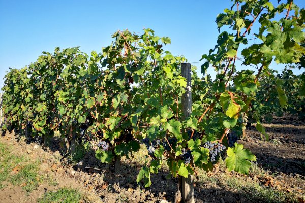 Ophorus Tours - Médoc Wine Tour Private Day Trip from Bordeaux for 2 persons