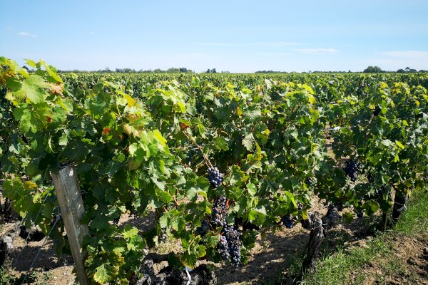 Ophorus Tours - Medoc Wine Tour Private Half Day Trip from Bordeaux for 2 persons