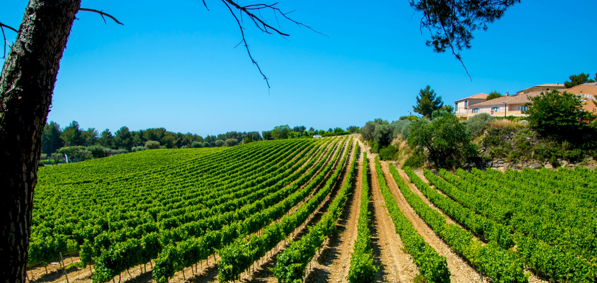 Ophorus Tours - Provence Wine Tour Private Full Day Shore Excursion From Sanary sur Mer