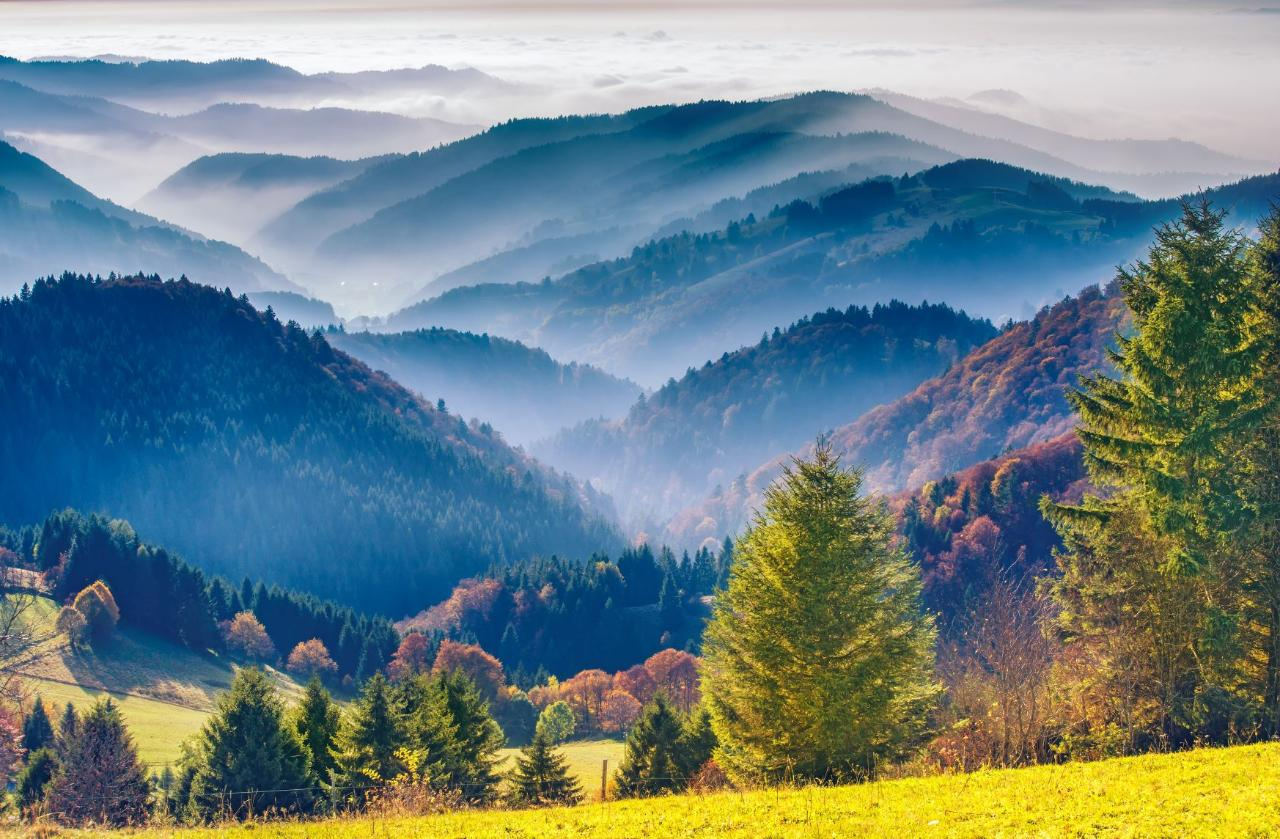 Ophorus Tours - Freiburg & The Black Forest Private Full Day Trip from Strasbourg for 2 persons