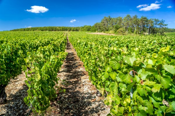 Ophorus Tours - From Paris to Beaune, Burgundy Private Sightseeing Transfer
