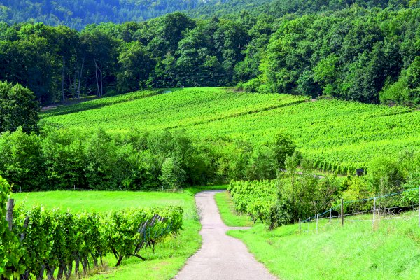 Ophorus Tours - Alsace Grands Crus Wine Tour Private Full Day Trip From Colmar for 2 persons