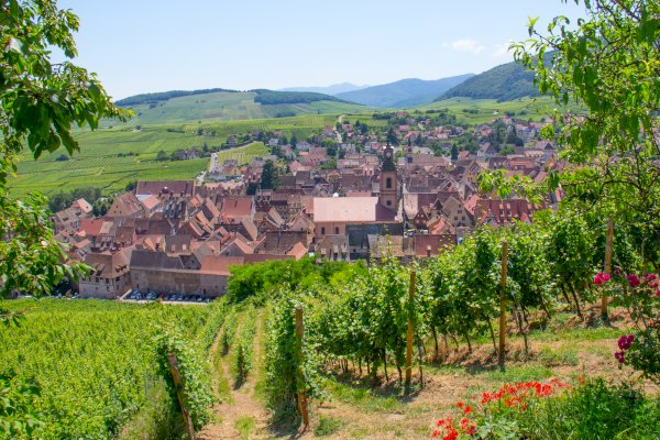 Ophorus Tours - Alsace Wine Tour Private Half Day Trip from Colmar for 2 persons