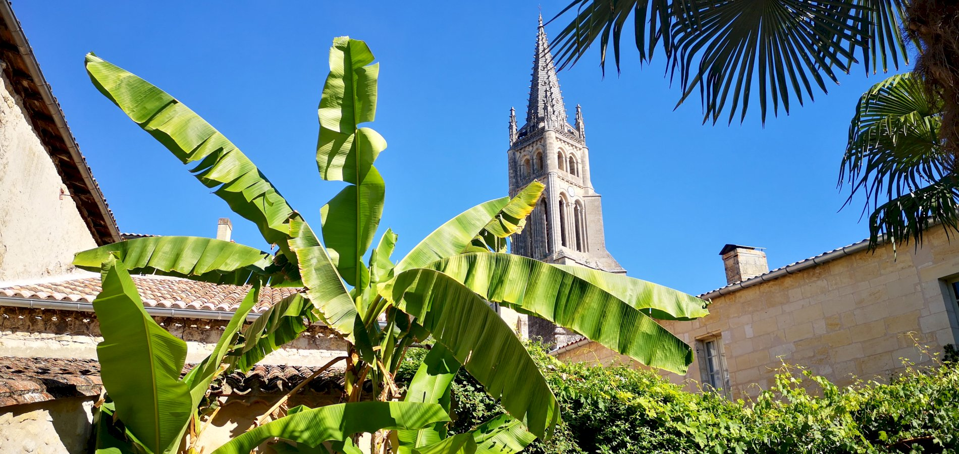 Ophorus Tours - Saint Emilion Wine Tour Private Full Day Trip from Bordeaux