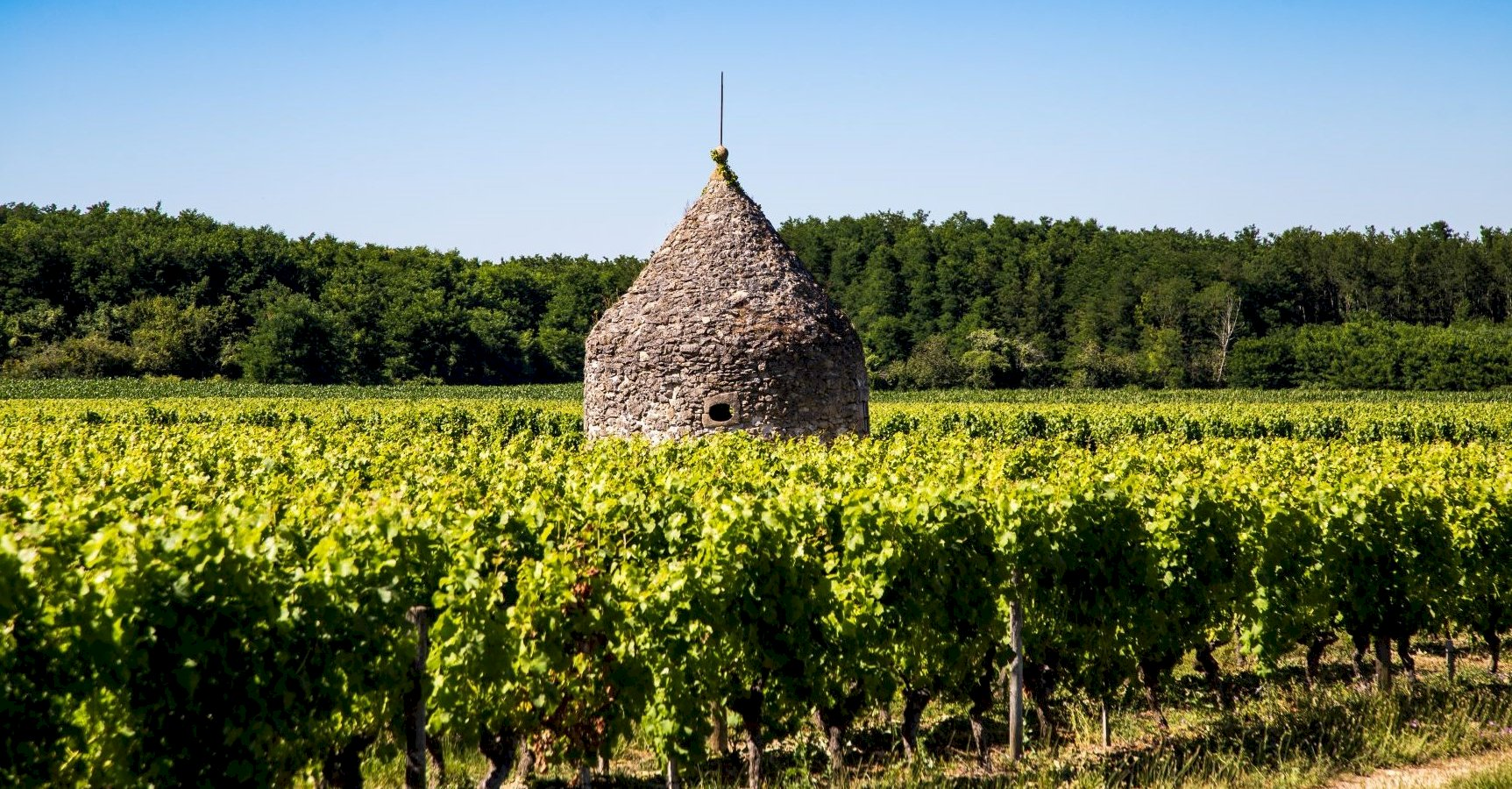 Ophorus Tours - Graves and Sauternes Wine Tour Small Group Private Full Day Trip From Bordeaux