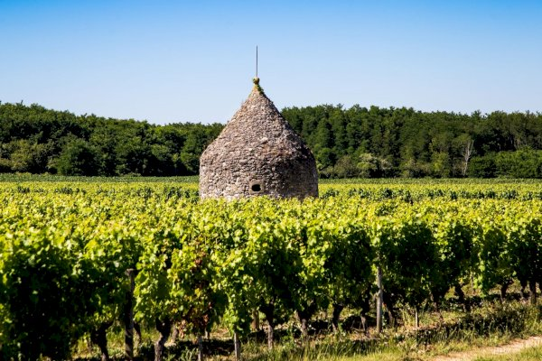 Ophorus Tours - Graves & Sauternes Wine Tour Small Group Private Full Day Trip From Bordeaux