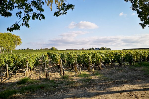 Ophorus Tours - Médoc Wine Tour Small Group Private Full Day Trip from Saint Emilion