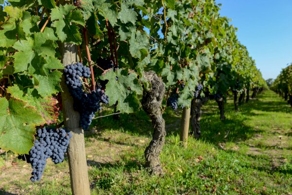 Ophorus Tours - Médoc Wine Tour Private Half Day Trip From Bordeaux